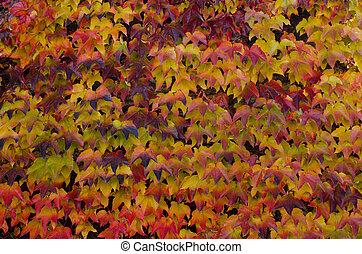 planta, coloreado, otoño, hojas, Plano de fondo, Montañismo