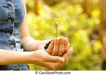 planta, com, solo, em, mãos