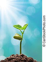 planta, con, luz del sol