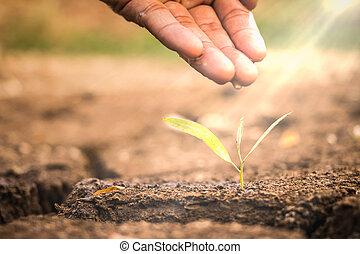 planta, conceito, amor, natureza, aguando, proteja, /, jovem, bebê, nutrir, mão