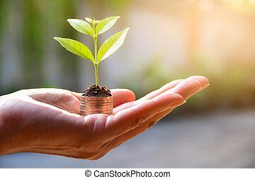planta, conceito, financeiro, dinheiro, mão., moedas, crescendo, salvar, concept.