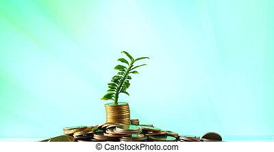planta, concepto, coins, -, él, pila, pequeño, interés, crecer, inversión, afuera