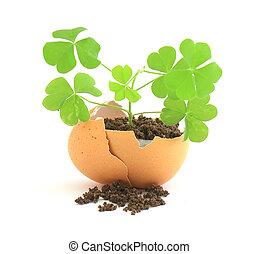 planta, concha, experiência verde, crescendo, ovo branco