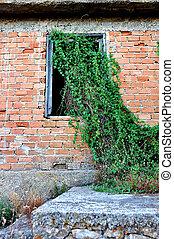 planta, crecer, a través de ventana
