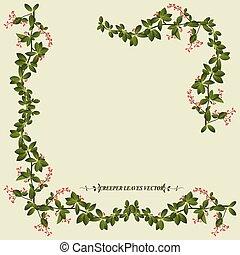 planta creeper, flor, borda
