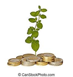 planta, crescendo, de, moedas
