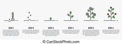 planta, crescendo, fases