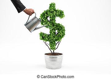 planta, dólar, forma., fazendo, potted, 3d