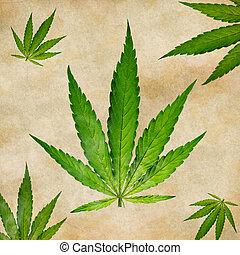 planta de cannabis, marijuana, joven