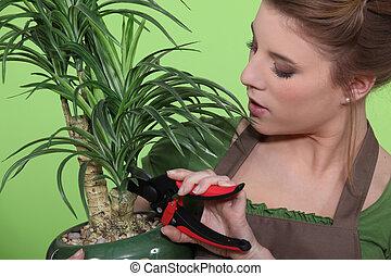 planta de interior, mujer, poda
