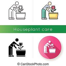 planta de interior, plant., icon., florecimiento, cuidado, ...