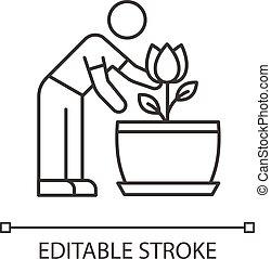 planta de interior, plant., icon., florecimiento, perfecto, ...