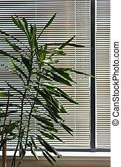 planta de interior, ventana, verde, persianas, contra
