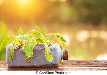 planta, de madera, luz del sol, plástico, muerto, botella,...