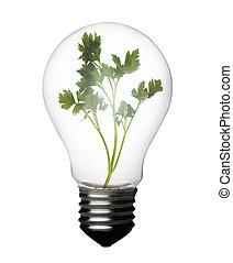 planta, dentro, bombilla