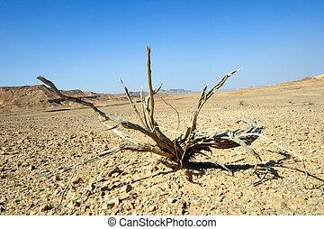 planta, desierto, muerto