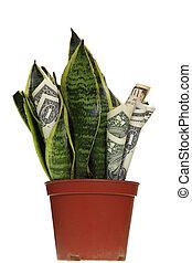 planta dinero, cuentas, dólar