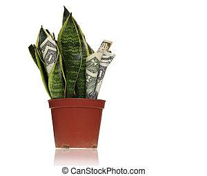 planta dinero, fabricante