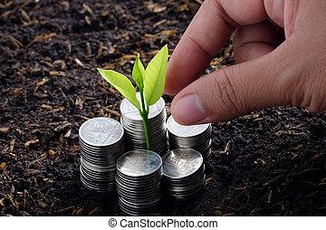 planta dinero, mano