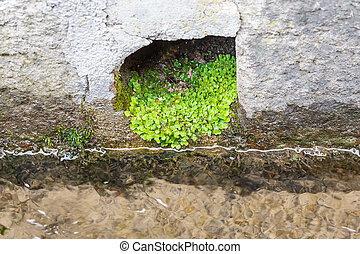 planta, drainage., crescer