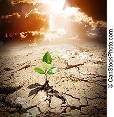 planta, em, árido, terra, clima, warming
