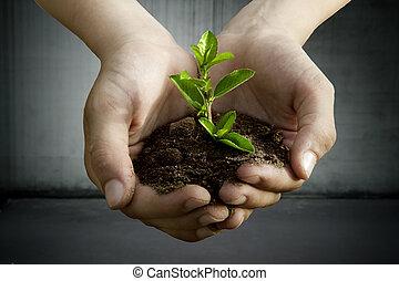planta, em, a, mãos