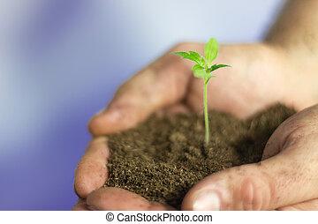planta, em, hands., agricultor, mãos, segurando, planta jovem, com, solo