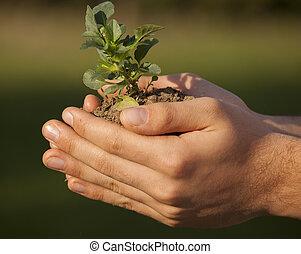planta, em, mãos, capim, fundo