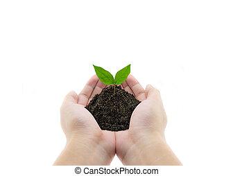 planta, em, mãos, -, capim, fundo, meio ambiente, conceito
