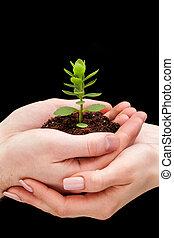 planta, em, mãos, -, ligado, experiência preta