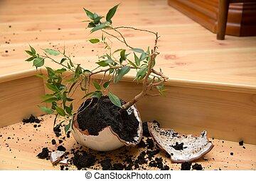 planta, em, um, quebrada, panela flor