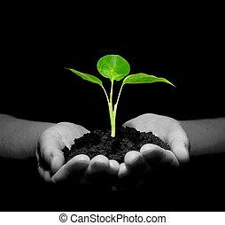 planta, en, manos