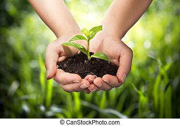 planta, en, manos, -, pasto o césped, plano de fondo