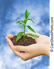 planta, en, un, mano
