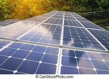 planta, energía solar