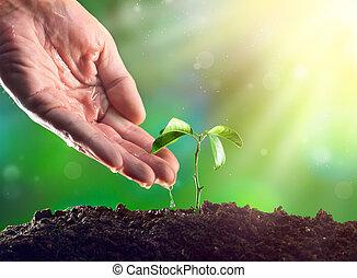 planta, fazendeiro, luz, aguando, jovem, mão, crescendo, manhã, plant.