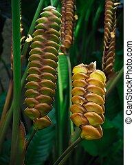 planta, flor, serpiente de cascabel