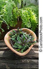 planta, flowerpot