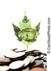 planta, folha, brotar, dinheiro, moedas, novo
