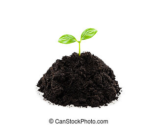 planta, folha, sujeira, broto, crescimento, verde, montão, solo, pequeno