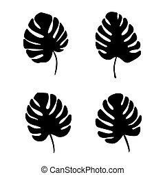 planta, folhas, tropicais, pretas, palma, monstera