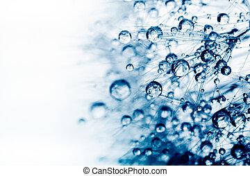 planta, foto, agua, drops., semillas, macro