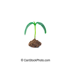 planta, fundo branco, isolado