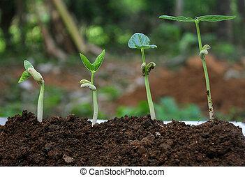 planta, growth-stages, de, crescendo, plantas