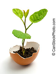 planta, huevo