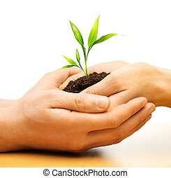 planta, human, broto, segurar passa, terra