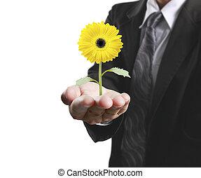 planta, humano, tenencia, Manos