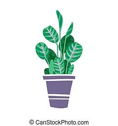 planta, ilustración, dibujado, pot., aislado, vector, mano, casa, maranta., hermoso