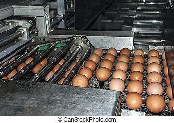 planta industrial, selección, huevo