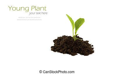 planta, isolado, experiência., verde, crescendo, branca